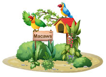 Two colorful parrots above a signboard and a birdhouse Stock Image