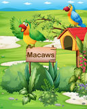 Two colorful parrots above a signboard and a pethouse Royalty Free Stock Photos