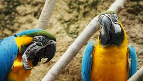 Two colorful parrots looking at you. With nature background behind stock images