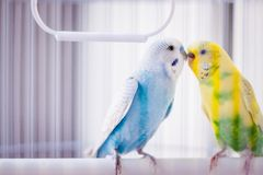 Colourful parrots in the cage royalty free stock photography