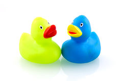 Two colorful rubber ducks. Isolated on white background stock images