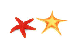 Two colorful seastars stock image