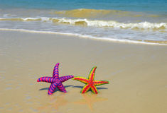 Two colorful seastars Stock Photo