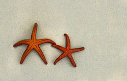 Two colorful star fishes ona beach sand Royalty Free Stock Photos
