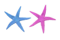 Two colorful starfish on a white background Stock Photography