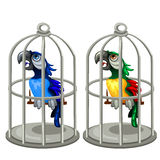 Two colorful tropical parrots in birdcage Royalty Free Stock Images