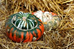 Two colorful Turk Turban squash. Stock Images