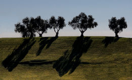 Only two colors. Olive trees silhouettes in the top of a green hill Stock Photography
