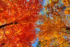 Two colors of autumn Royalty Free Stock Photos