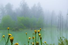 Two colors, green and yellow nature. royalty free stock images