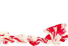 Two colors  rose petals Stock Image