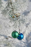 Two colour balls on a snow-covered tree Royalty Free Stock Image