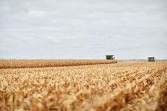 Two combine harvesters in a maize field Stock Photos