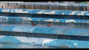 Two Common Mynas Bathing. Two common mynas, Acridotheres tristis, are having a bath in blue pool stock footage