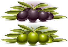 Two composition of olives. Detailed illustration of a two composition of olives Stock Image