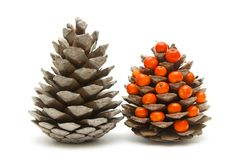 Two cones and ashberry Stock Photos