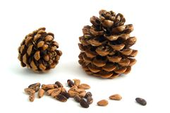 Two cones with seeds. Isolated on white background Royalty Free Stock Images