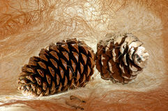 Two cones. With seeds on the fibrous structure royalty free stock images