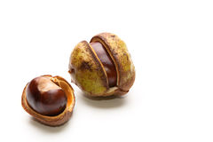 Two Conkers Royalty Free Stock Images