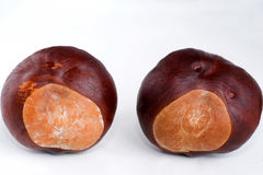 Two conkers Royalty Free Stock Photos