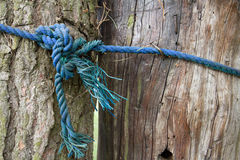 Two connected blue rope tree trunks Royalty Free Stock Photo