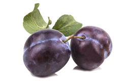 Two connected blue sweet ripe plums Royalty Free Stock Photo