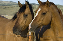 Two content horses. On a farm royalty free stock photos