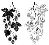 Two contour branches hop Stock Photos