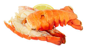 Two cooked Lobster Tails Royalty Free Stock Photo