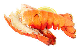 Two cooked Lobster Tails Stock Photos
