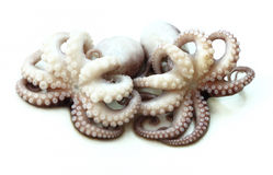 Two cooked octopus Royalty Free Stock Images