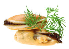 Two cooked unshelled sea mussel with dill twig Stock Photos
