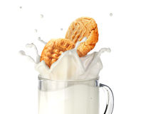 Two cookies biscuits falling into a glass mug full of fresh milk. Royalty Free Stock Images
