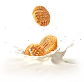 Two cookies biscuits falling into milk splashing. Stock Image
