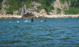 Two cormorants run on water stock images