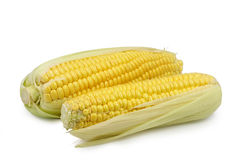 Two corn on cob Royalty Free Stock Photography
