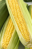 Two corn on cob Stock Images