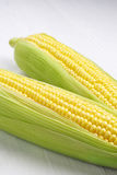 Two corn cob closeup Stock Image