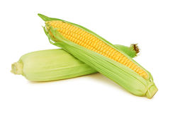 Two corn on the cob with green leaves (isolated) Royalty Free Stock Images