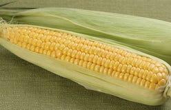 Two corn on the cob Stock Photos