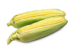 Two corn cob Stock Image