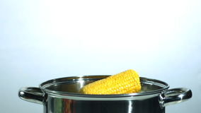 Two corn cobs falling into a saucepan. In slow motion stock video footage