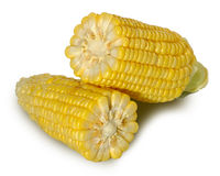 Two corn isolate Stock Images