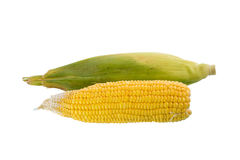 Two corn Stock Image