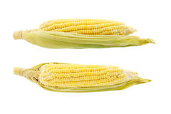 Two corn isolated on white background Stock Photography