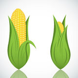 Two corn with leaf Stock Image