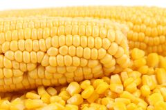 Two corncobs and handful canned corns. Stock Photography