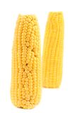 Two corncobs on a white background Stock Images