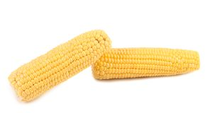 Two corncobs on a white background Royalty Free Stock Image