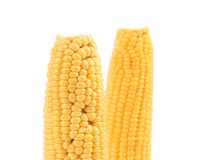 Two corncobs on white. Stock Images